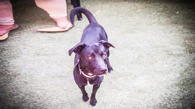 Hund wegen Urlaub verkauft (Foto: SAT.1 NRW)