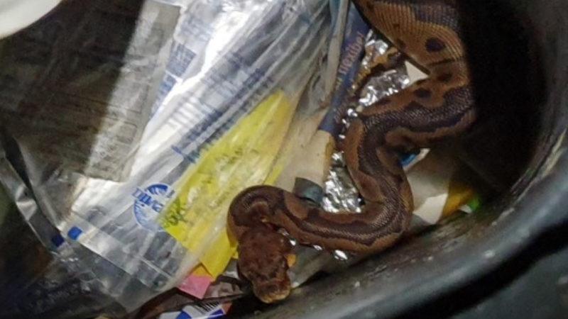 Würgeschlange im Müll gefunden (Foto: SAT.1 NRW)