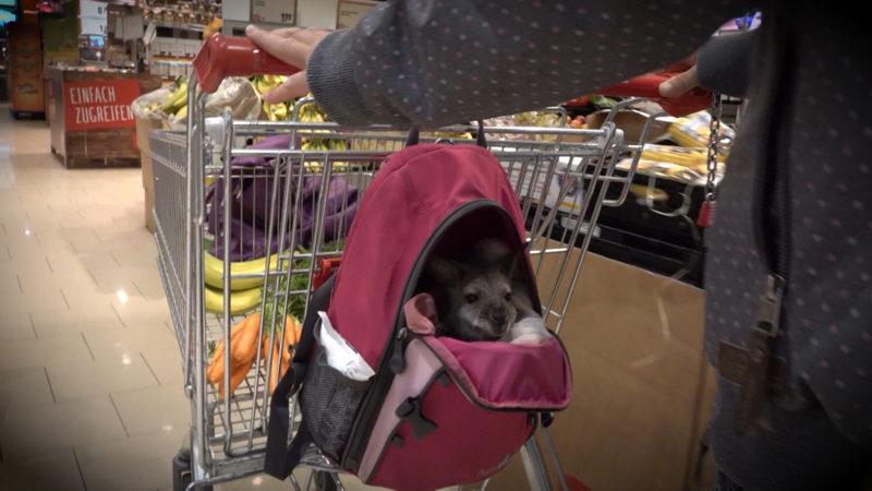 Känguru geht einkaufen (Foto: SAT.1 NRW)
