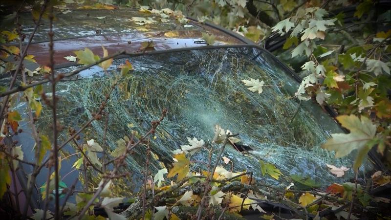 Baum zerquetscht Autos (Foto: SAT.1 NRW)