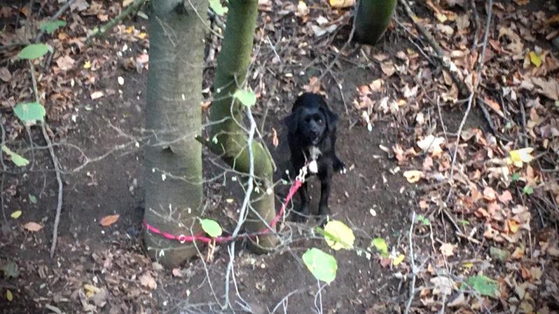 Hund ausgesetzt (Foto: SAT.1 NRW)