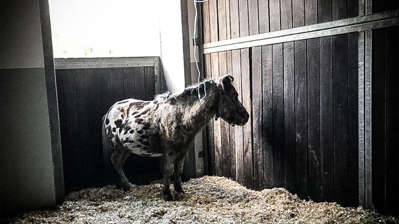Zirkuspferde vergiftet? (Foto: SAT.1 NRW)