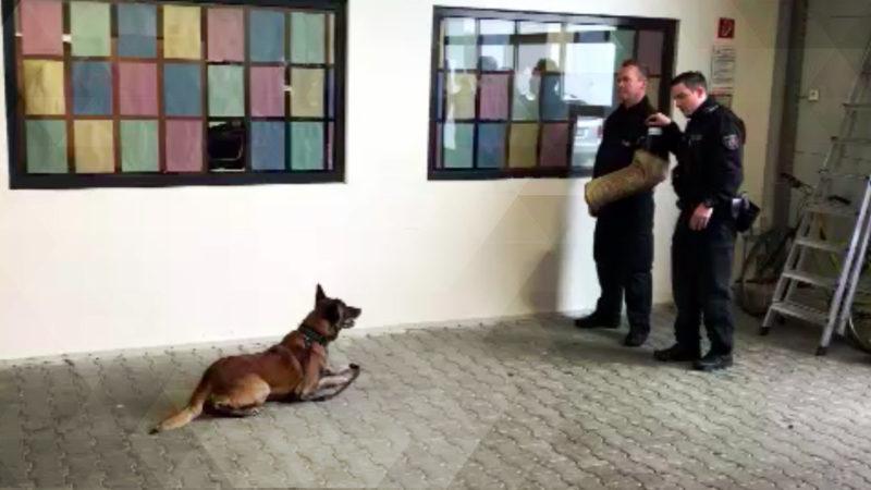 Polizeihunde Vargas und Teefje gehen in Rente (Foto: SAT.1 NRW)