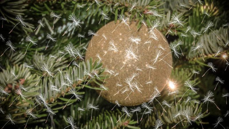 Hatschi unterm Baum? (Foto: SAT.1 NRW)