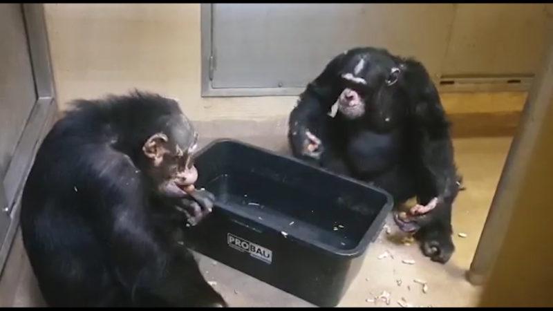 Gute Neuigkeiten aus dem Krefelder Zoo (Foto: SAT.1 NRW)