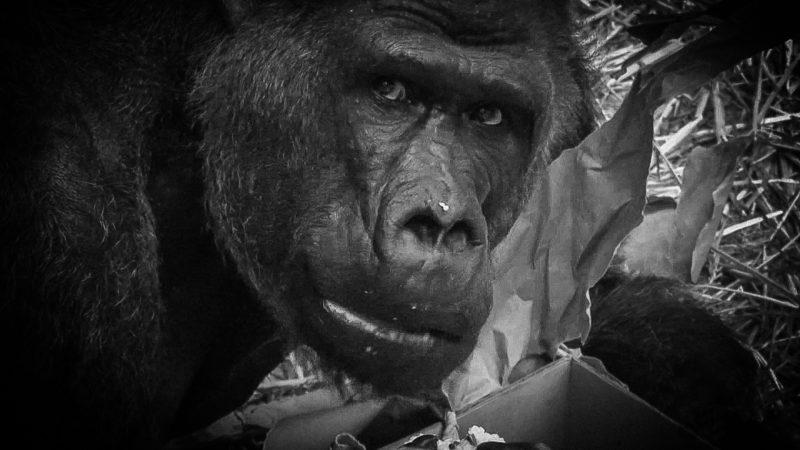 Ehemaliger Zoodirektor erinnert sich an Massa (Foto: SAT.1 NRW)