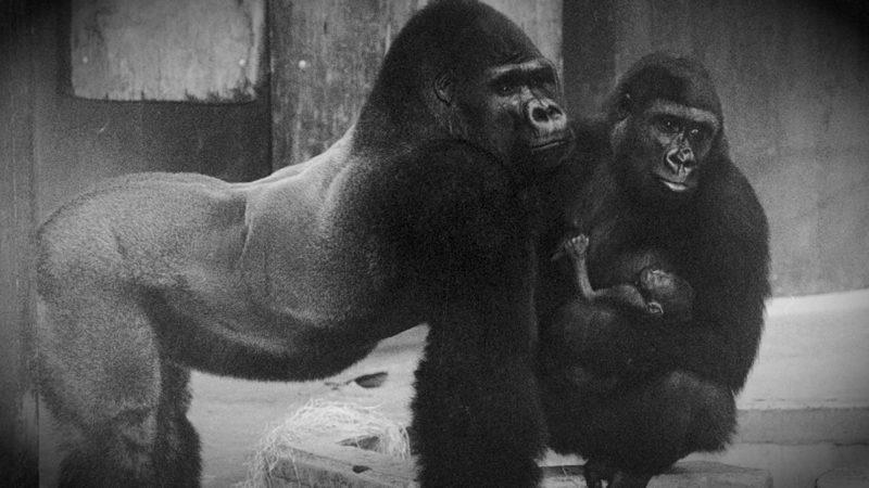 Mahnwache vorm Zoo Krefeld (Foto: SAT.1 NRW)