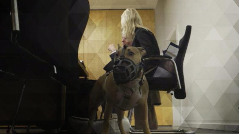 Hunde vor Gericht (Foto: SAT.1 NRW)