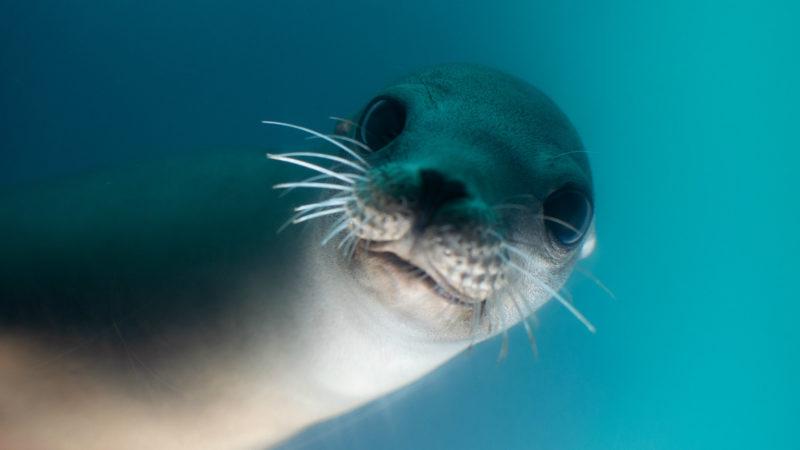 Robben bekommen neues Gehege (Foto: SAT.1 NRW)