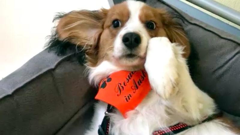Kleiner Elmo will Schulhund werden (Foto: SAT.1 NRW)