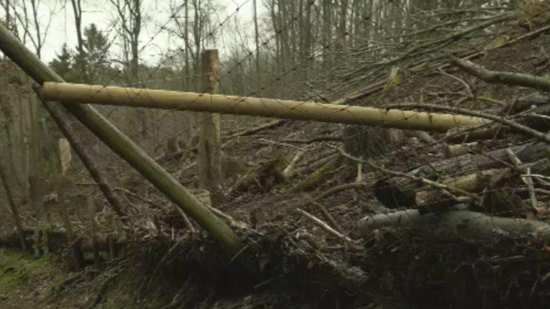 Wildpark zerstört (Foto: SAT.1 NRW)