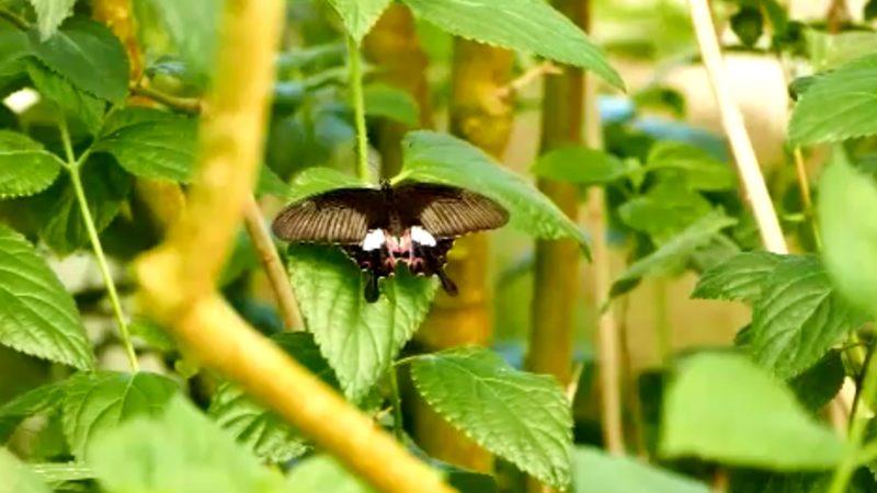 Schmetterlinge feiern Geburtstag (Foto: SAT.1 NRW)