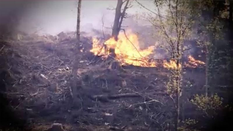 Wälder in NRW brennen (Foto: SAT.1 NRW)