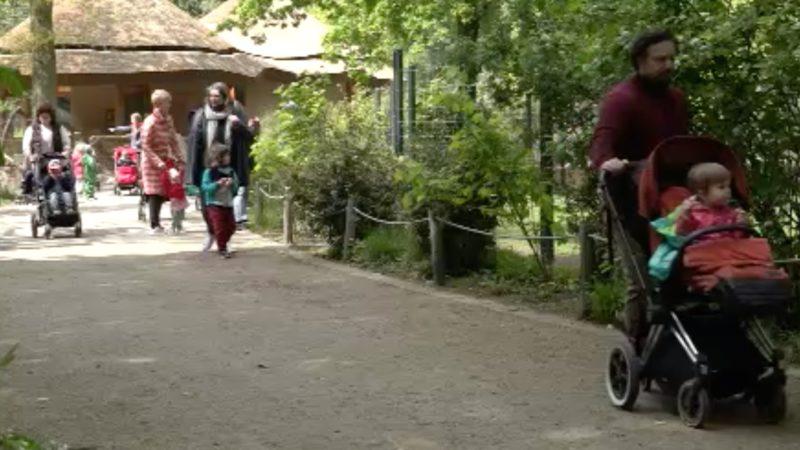 Corona-Lockerungen: Zoos wieder geöffnet (Foto: SAT.1 NRW)