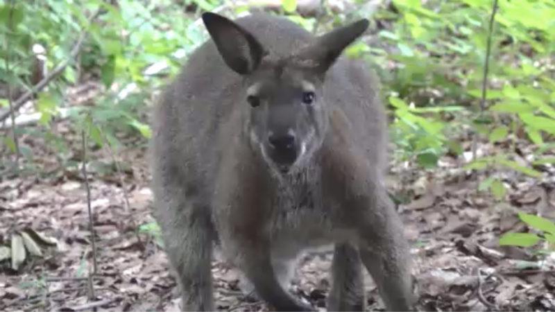 Känguru verschwunden (Foto: SAT.1 NRW)