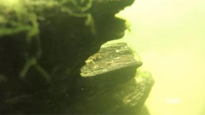 1000 Jahre altes Schiffswrack entdeckt (Foto: SAT.1 NRW)
