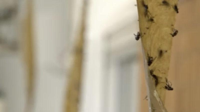 Fliegenplage in Dormagen (Foto: SAT.1 NRW)