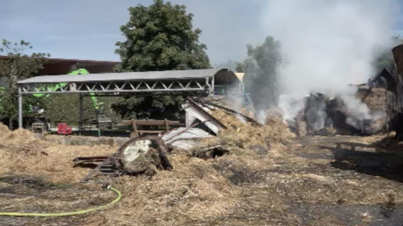 Pferde sterben bei Großbrand in Reitstall (Foto: SAT.1 NRW)