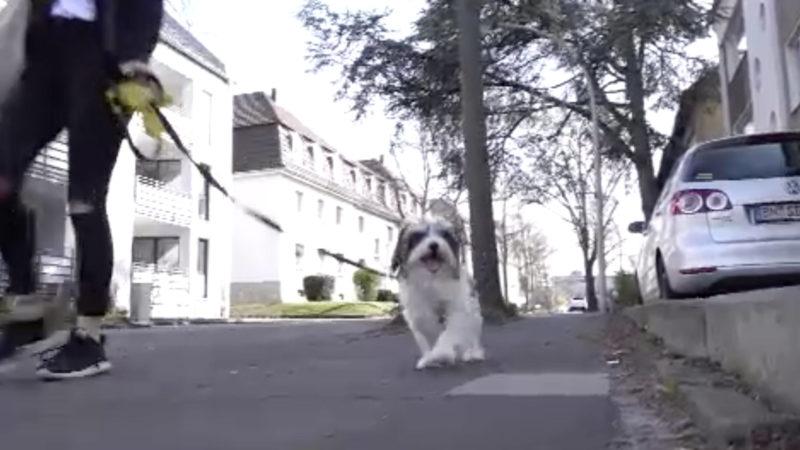 Gassipflicht für Hundehalter (Foto: SAT.1 NRW)