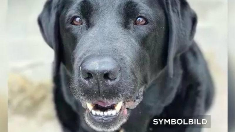 Wilder Hund beißt Kinder (Foto: SAT.1 NRW)
