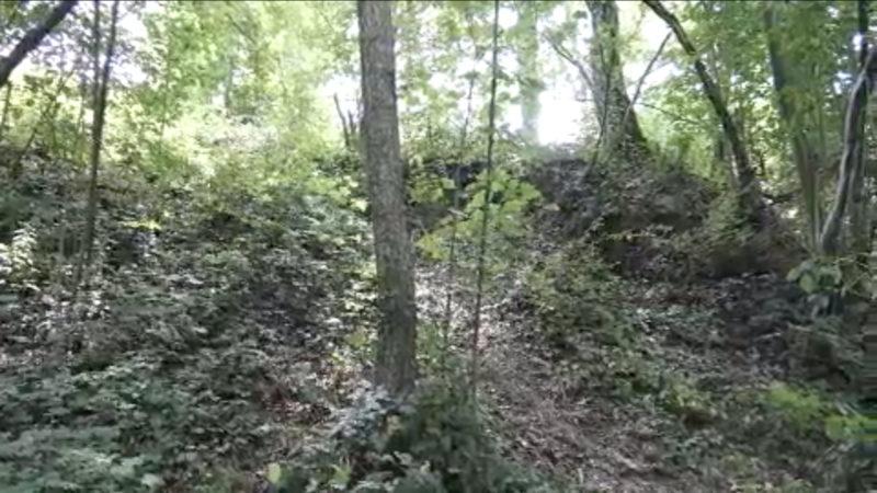 Leiche in Bonner Waldstück entdeckt (Foto: SAT.1 NRW)