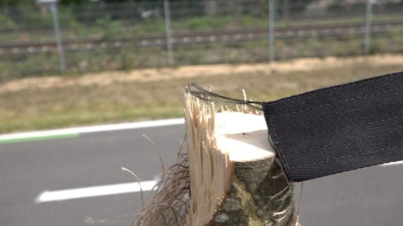 Unbekannte fällen Bäume an neuem Radweg (Foto: SAT.1 NRW)