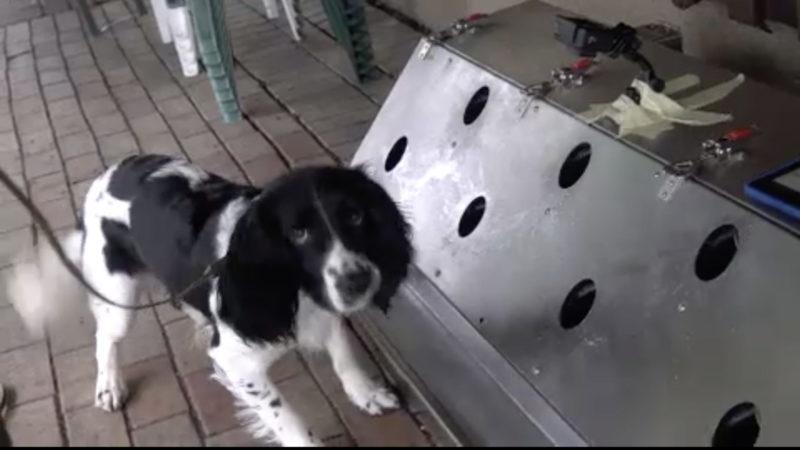 Hunde erschnüffeln Corona (Foto: SAT.1 NRW)