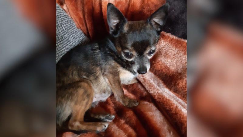 Hundehasser treten Hund tot (Foto: SAT.1 NRW)