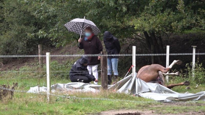 Stute misshandelt und getötet (Foto: SAT.1 NRW)