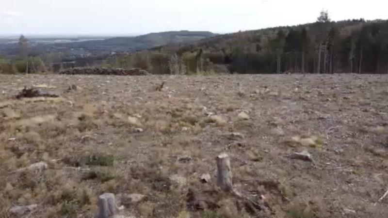 Tote Wälder - ausgetrocknete Talsperren (Foto: SAT.1 NRW)