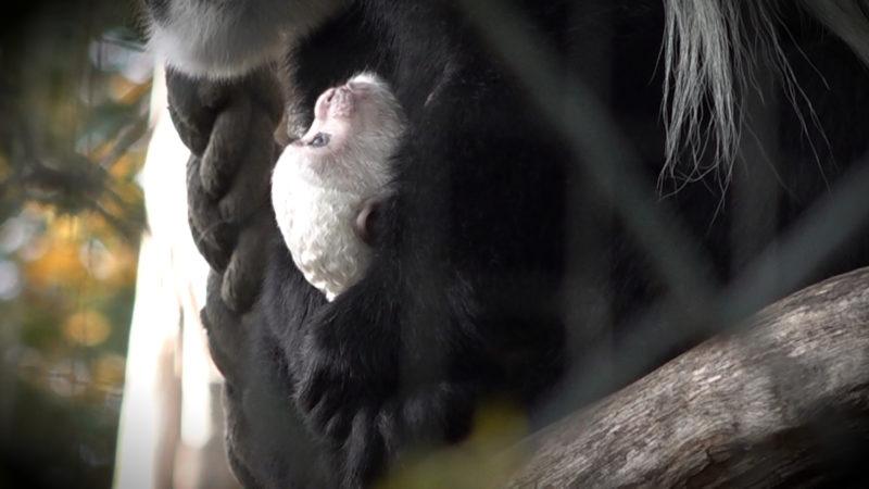 Krefelder Zoo blickt in die Zukunft (Foto: SAT.1 NRW)