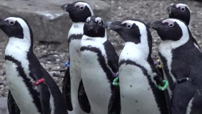 Neue Pinguine in der Zoom-Erlebniswelt (Foto: SAT.1 NRW)