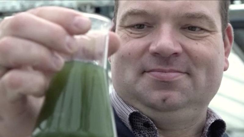 Bauer sieht Zukunft in Algen-Anbau (Foto: SAT.1 NRW)