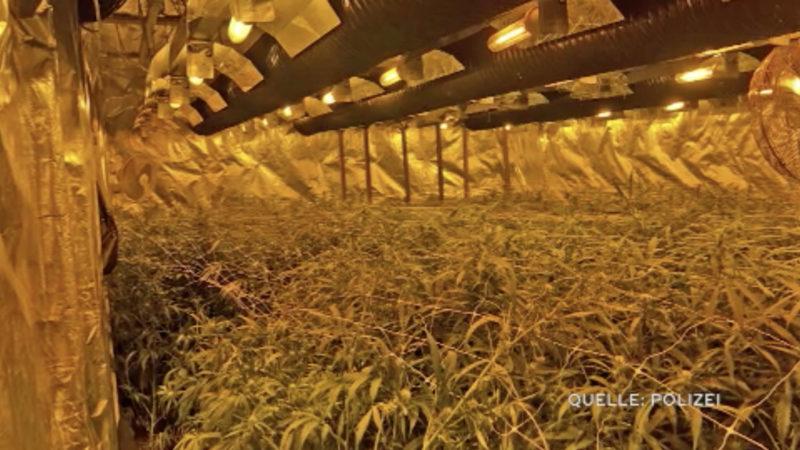SEK-Einsatz: Cannabis-Plantage in Werkstatt entdeckt (Foto: SAT.1 NRW)