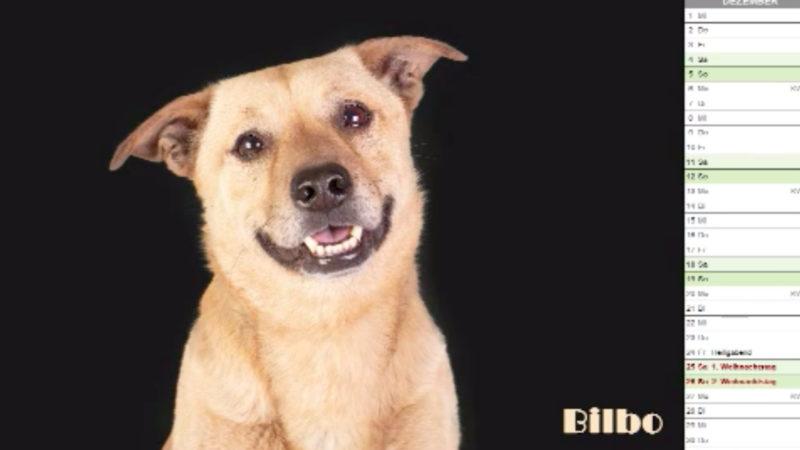 Tierheimhunde werden Kalender-Stars (Foto: SAT.1 NRW)