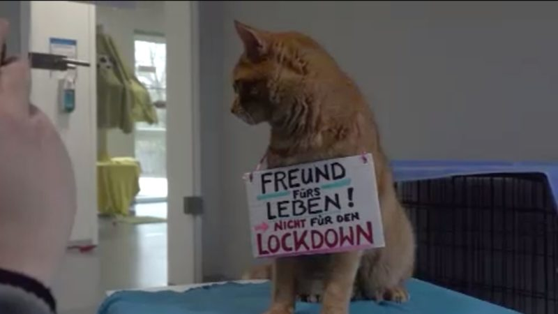 Haustier-Boom im Lockdown (Foto: SAT.1 NRW)