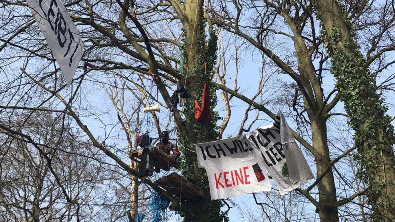 Aktivisten besetzen Bäume im Storck-Wald (Foto: SAT.1 NRW)
