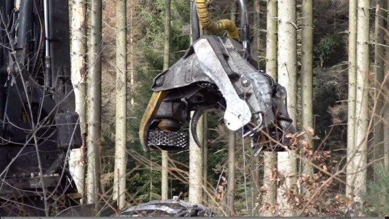 Wälder sterben ab (Foto: SAT.1 NRW)