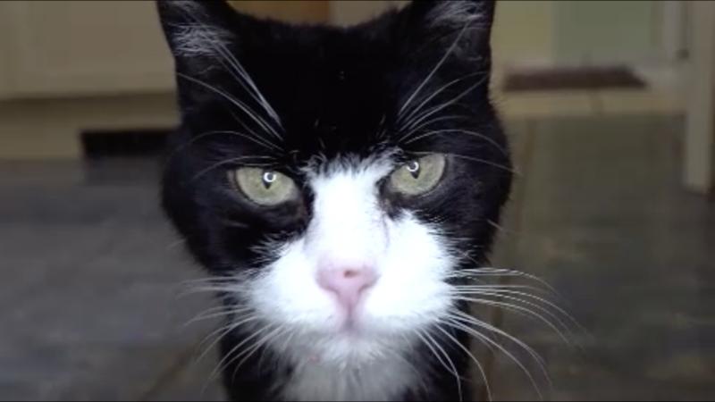 Katze nach zwölf Jahren wieder da (Foto: SAT.1 NRW)