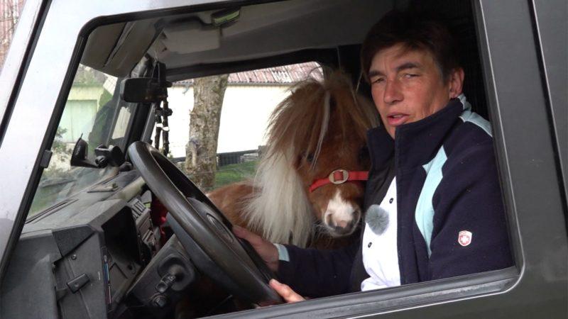 Mini-Pony als Beifahrer (Foto: SAT.1 NRW)