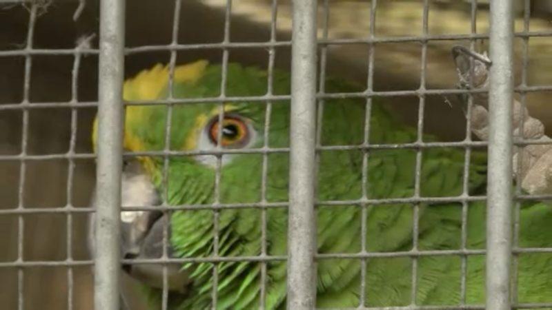 Gestohlene Papageien wieder aufgetaucht (Foto: SAT.1 NRW)