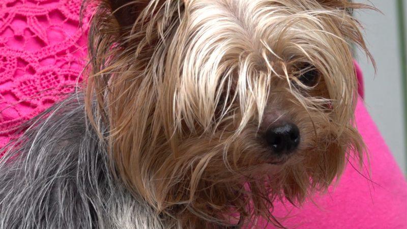 Hund stirbt an Vergiftung (Foto: SAT.1 NRW)