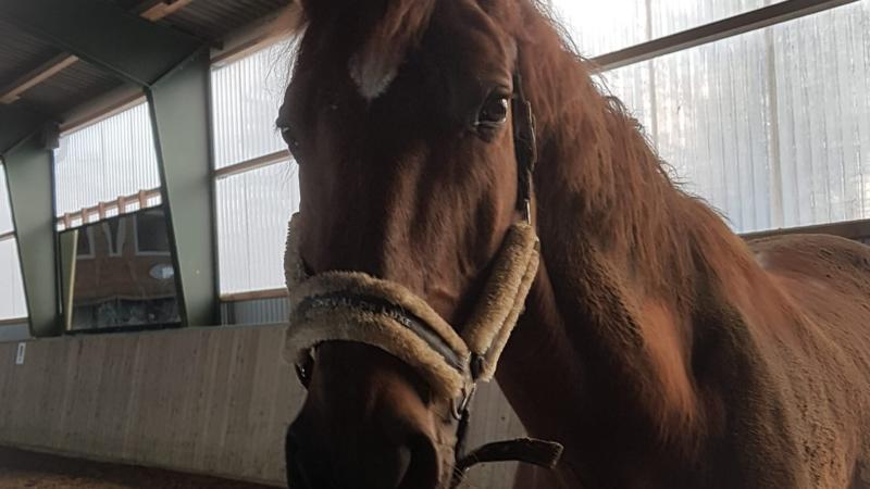 Unbekannter tötet Pferd (Foto: SAT.1 NRW)