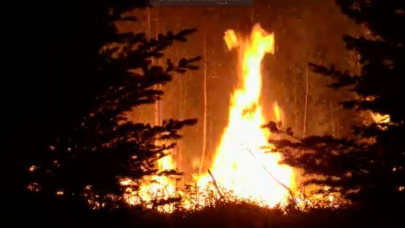 Erster grosser Waldbrand (Foto: SAT.1 NRW)