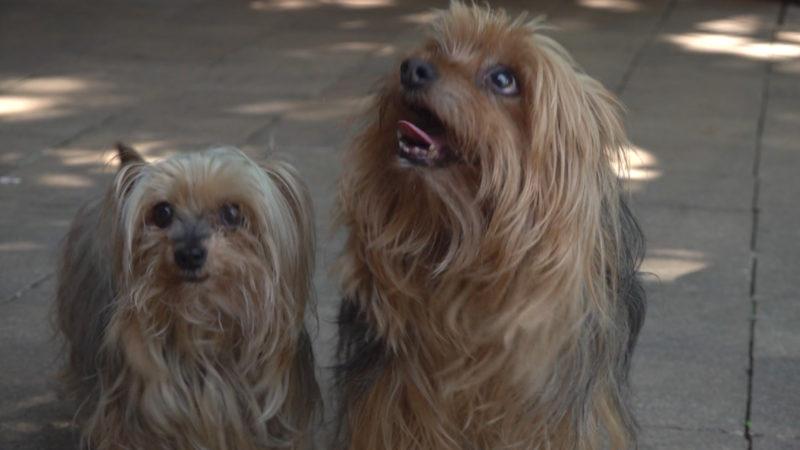 Haustiere im Katastrophen-Gebiet (Foto: SAT.1 NRW)
