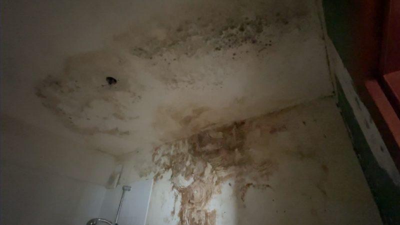 Mieter-Horror: Schimmelwohnung (Foto: SAT.1 NRW)