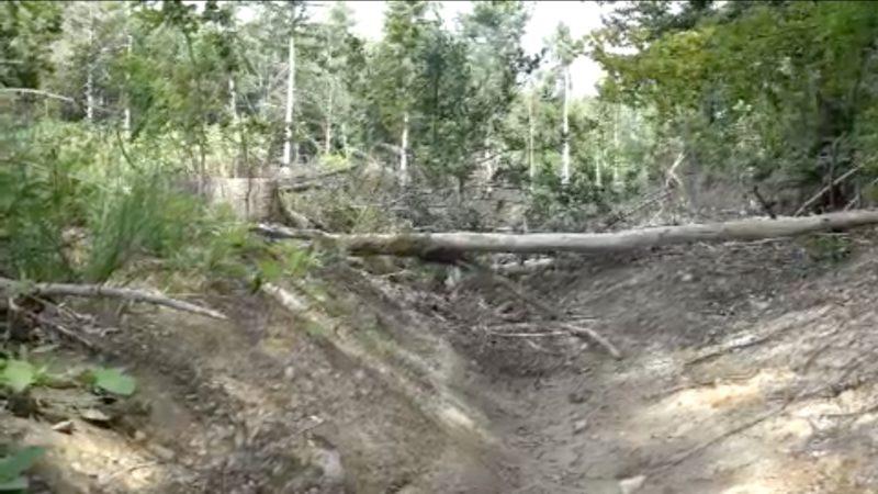 Waldzustand trotz Regenmassen verschlechtert (Foto: SAT.1 NRW)