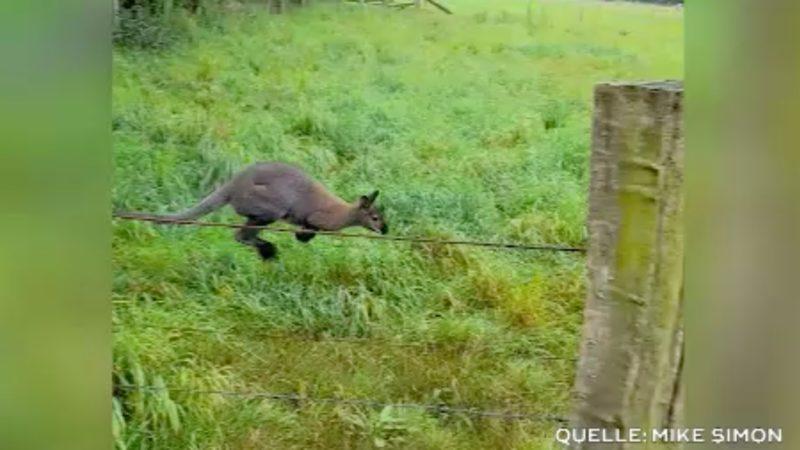 Achtung Känguru! (Foto: SAT.1 NRW)