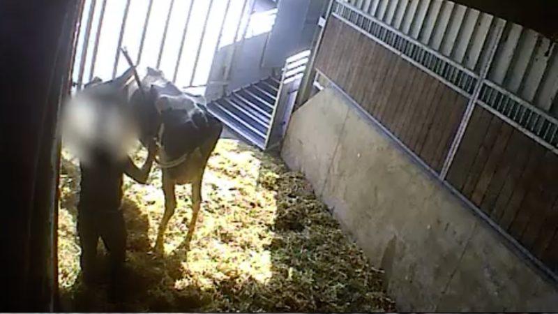 Schlachthof mit Tierquälerei geschlossen (Foto: SAT.1 NRW)