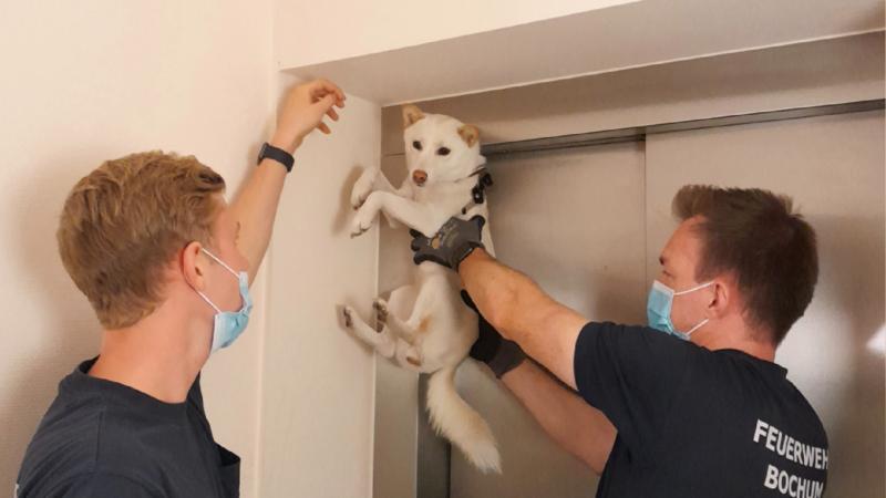 Hund aus Aufzug gerettet (Foto: SAT.1 NRW)